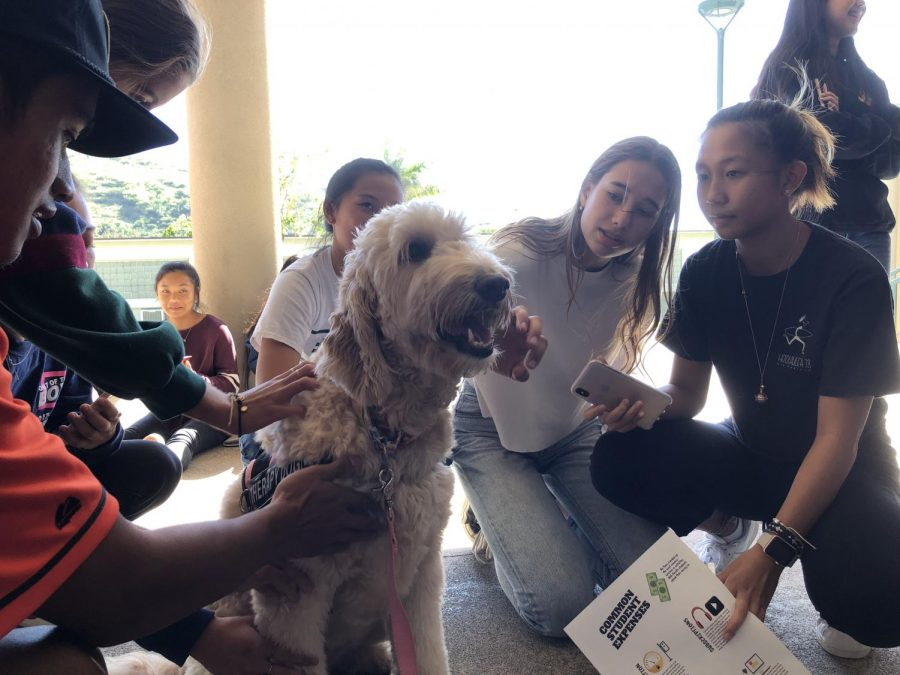 Therapy dogs at Mid-Pacific for exam week