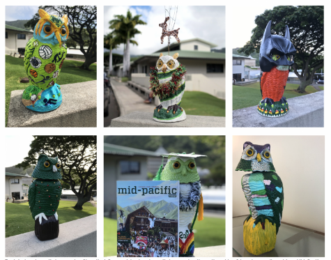 Some of the campus owls on the Mid-Pacific campus. Someone places the owls throughout the school year.
